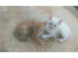 Se reagala 3 gatitos  Puerto Rico
