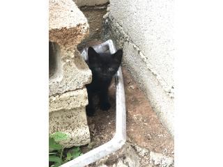 Preciosa gatita para adopcion Puerto Rico