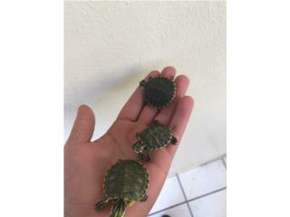 Tortugas Puerto Rico