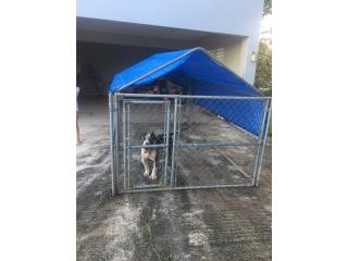 Jaula para perros Puerto Rico