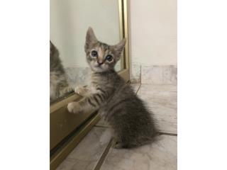 Se regala preciosa gatita Puerto Rico