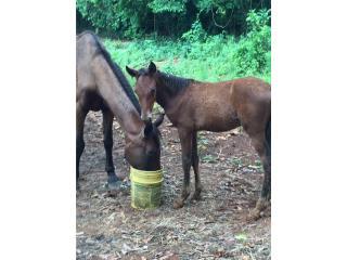Coco-piña hijo de la FE andadura Puerto Rico