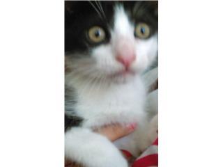 Regalo gatito de tres meses Puerto Rico