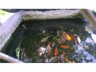 Se venden variedad de peces Puerto Rico