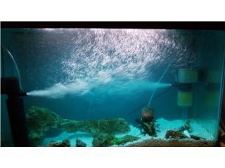Acuario de Agua dulce de 45 galones  Puerto Rico
