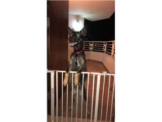 Se Regala Perro Puerto Rico