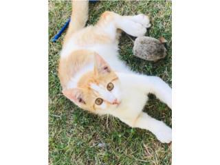 Puerto Rico Hermoso gatito, Perros Gatos y Caballos