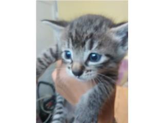 2 gatitos bb  Puerto Rico