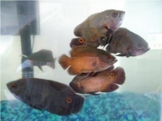Variedad de peces Puerto Rico
