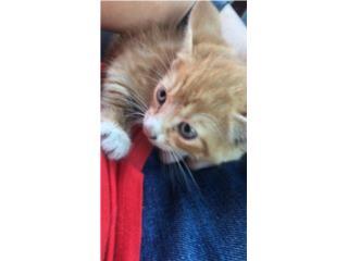 Se regala hermosa gatita de 3 meses Puerto Rico