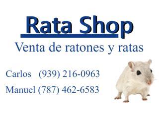 Puerto Rico Ratones para tus culebras a $3 pesitos , Perros Gatos y Caballos