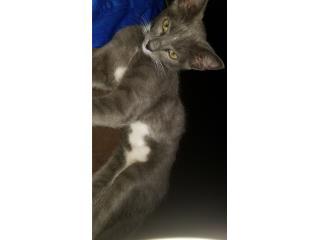 Gato tiene 8 meses  Puerto Rico