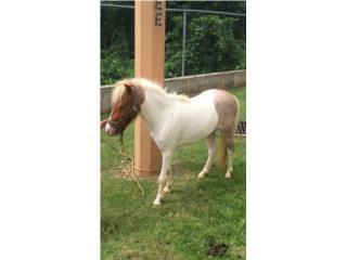 Hermosa Pony Puerto Rico
