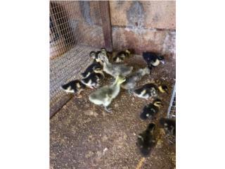 Venta de animales en el pulguero de Mayaguez Puerto Rico