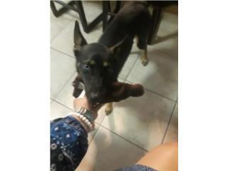 Puerto Rico Se regala perro, Perros Gatos y Caballos