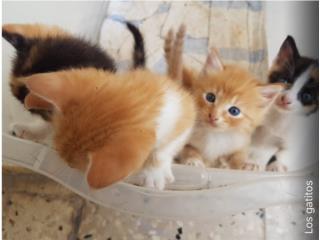 ***regalo  gatitos preciosos **^ Puerto Rico