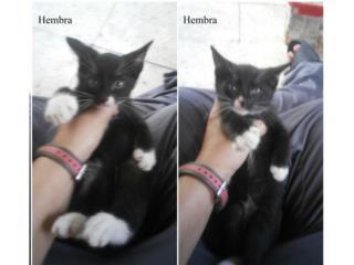 Regalando 2 gatitas de 3 meses Puerto Rico