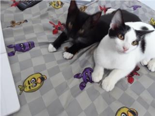 Hermosos gatitos necesitan un hogar Puerto Rico