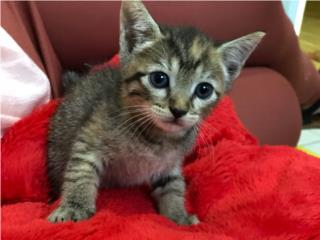 Se regala gatito  Puerto Rico