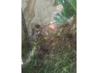 Se regalan gatitos de 2 meses aprox. Puerto Rico