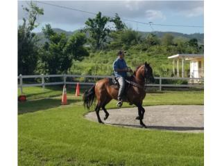 Puerto Rico HERMOSO CABALLO COLOMBIANO, Perros Gatos y Caballos