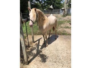 Excelentes caballos Puerto Rico