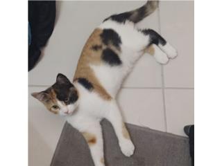 Una gatita para adopción  Puerto Rico