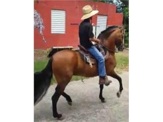 Puerto Rico PRECIOSO CABALLO COLOMBIANO, Perros Gatos y Caballos