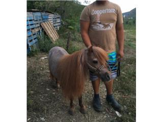 Pony de 27 pulgadas de alto  Puerto Rico