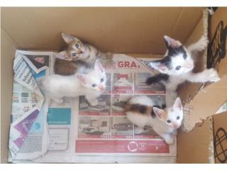 Regalo gatitos Puerto Rico
