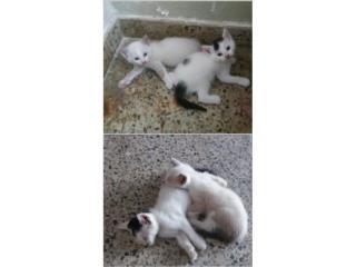 Se regalan gatitos machos Puerto Rico