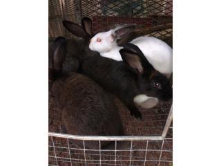 Venta de Conejos  Puerto Rico