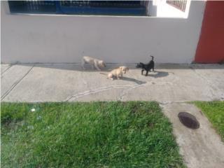 Cachorritos adopción Puerto Rico