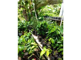 Plantas frutales Puerto Rico