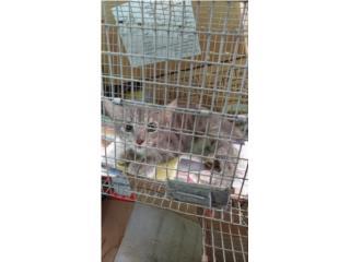 Para adopción gatitos que nacieron aquí  Puerto Rico