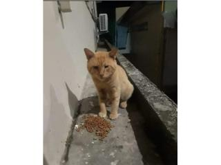 Cat Puerto Rico