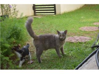 Hermosas gatas, mamá y bebé.  Puerto Rico