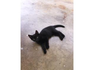 Gatito bebe nena color negro  Puerto Rico