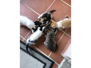 3 gatitos para adopción , Mascotas Puerto Rico