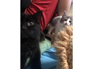 Gatos buscan hogar  Puerto Rico