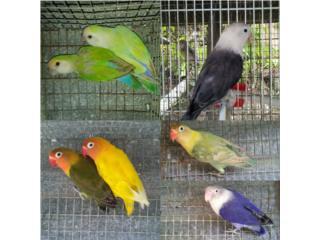 Los cambio por aves son 7  Puerto Rico