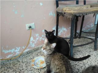 2 hermosos gatos para adopción Arecibo Puerto Rico