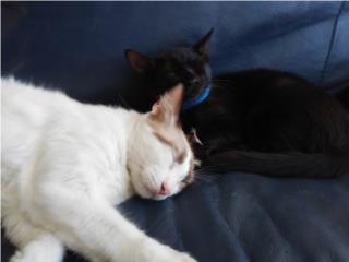 Clasificados Online Mascotas Gatito 5-6 Meses