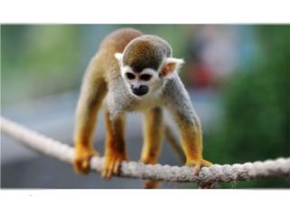 Super mono en exelentes condiciones Puerto Rico