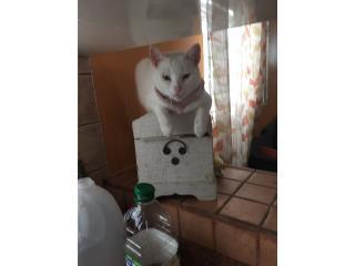 Necesito hogar que ame a los gatos Puerto Rico