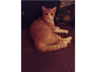 Estoy regalando este gatito de 6 meses Puerto Rico