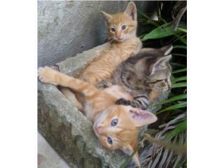 Gatitos gatos Puerto Rico