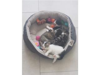 Hermosos gatitos 1 mes Puerto Rico