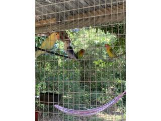 Pájaros  Puerto Rico