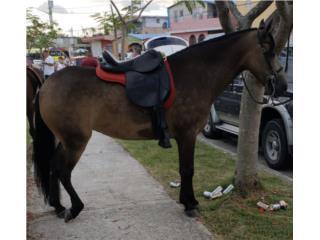 Yegua Valla de Excelente Calidad Puerto Rico